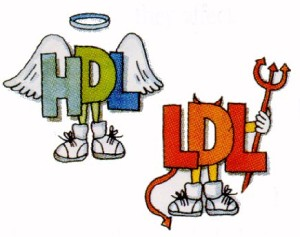 hdl-ldl-kolesterol-nedir-300x237